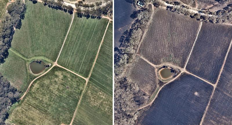 Vineyard in Adelaide Hills in aerial photos taken before and after a bushfire.