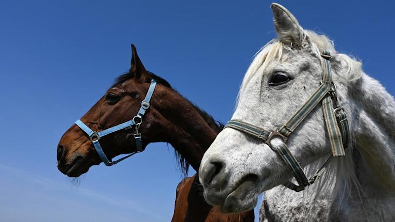 French police  baffled by wave of violent attacks on horses across France