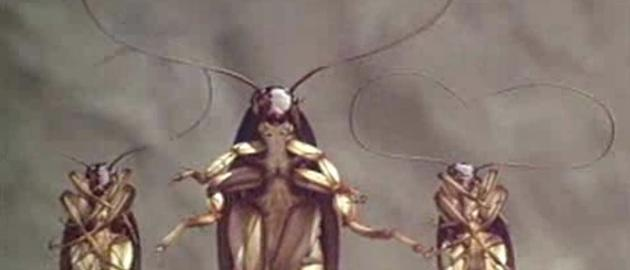 Meet New York City's brand new all-weather cockroaches
