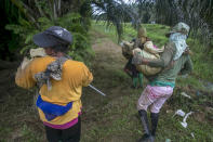 Female workers carry heavy loads of fertilizer at a palm oil plantation in Sumatra, Indonesia, Tuesday, Nov. 14, 2017. Some women spread up to 880 pounds of fertilizer, nearly a half-ton, over the course of a day. (AP Photo/Binsar Bakkara)