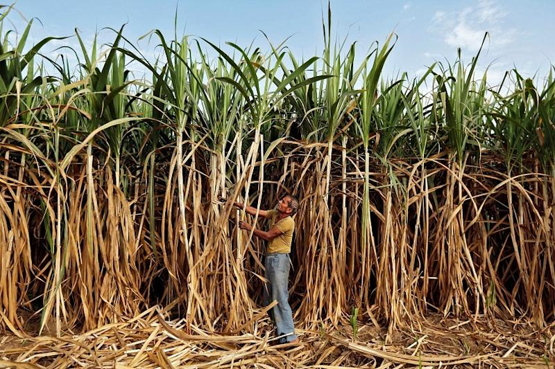 Worst Seems to Be Over, Farm Sector to Cushion Covid-19 Impact on Economy: FinMin Report