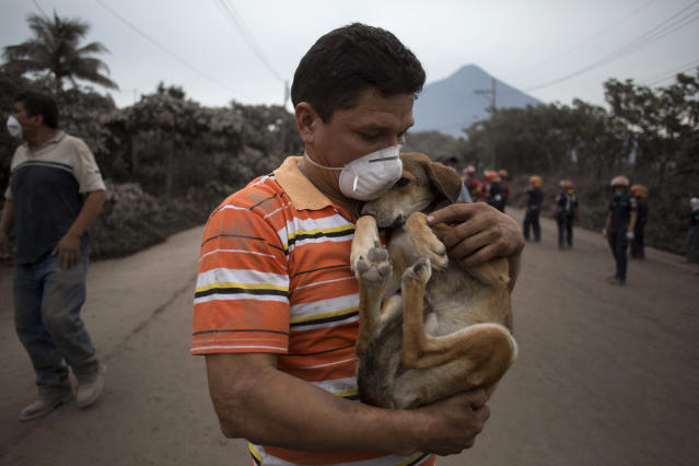 "<p>A resident cradles his dog after rescuing him near the Volcan de Fuego, or ""Volcano of Fire,"" in Escuintla, Guatemala, June 4, 2018. (Photo: Luis Soto/AP) </p>"