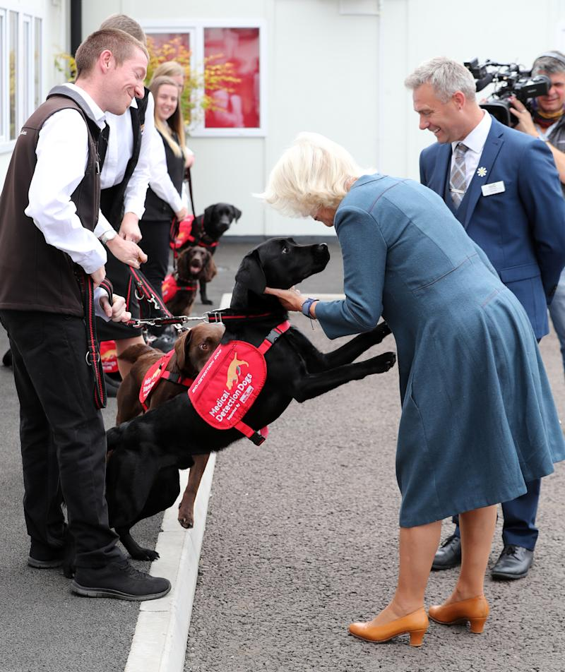 MILTON KEYNES, ENGLAND - SEPTEMBER 09: Camilla, Duchess of Cornwall, Patron of Medical Detection Dogs, during a visit to the charity's training centre where trials are currently underway to determine whether dogs can act as a diagnostic tool of COVID-19 on September 09, 2020 in Milton Keynes, England. (Photo by Chris Jackson - WPA Pool/Getty Images)