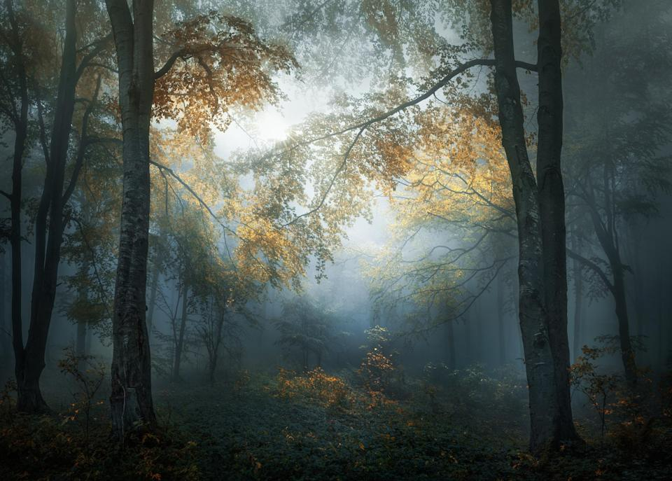 <p>The autumn has begun to decorate with its colors the woods of the Balkans. National Park – Central Balkan, Bulgaria. (Veselin Atanasov, Winner, Open Landscape & Nature and Winner, Bulgaria National Award, 2018 Sony World Photography Awards) </p>