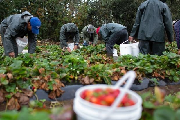 A new report on the living conditions of seasonal workers was released Thursday by the Migrant Rights Network.  (Maggie MacPherson/CBC - image credit)