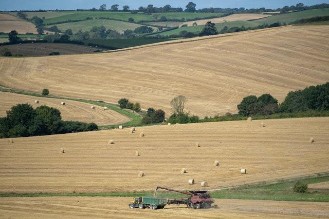 A combine harvester cuts the last of the wheat in a field near Ridlington in Rutland