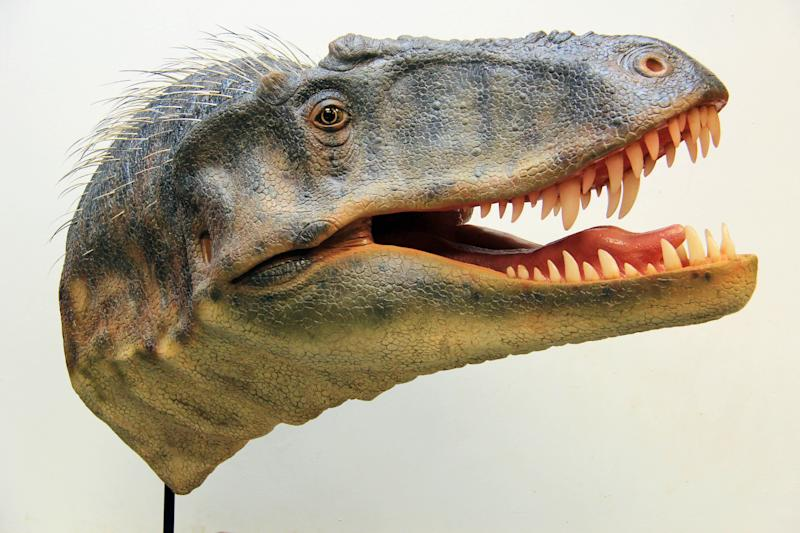 This image released by the Natural History Museum of Utah shows a model of a newly-discovered dinosaur, Lythronax argestes, whose fossils have been found in southern Utah. Paleontologists say the bone-crushing carnivore is the equivalent of the great uncle of the T. rex. (AP Photo/Natural History Museum of Utah, Gary Staab)