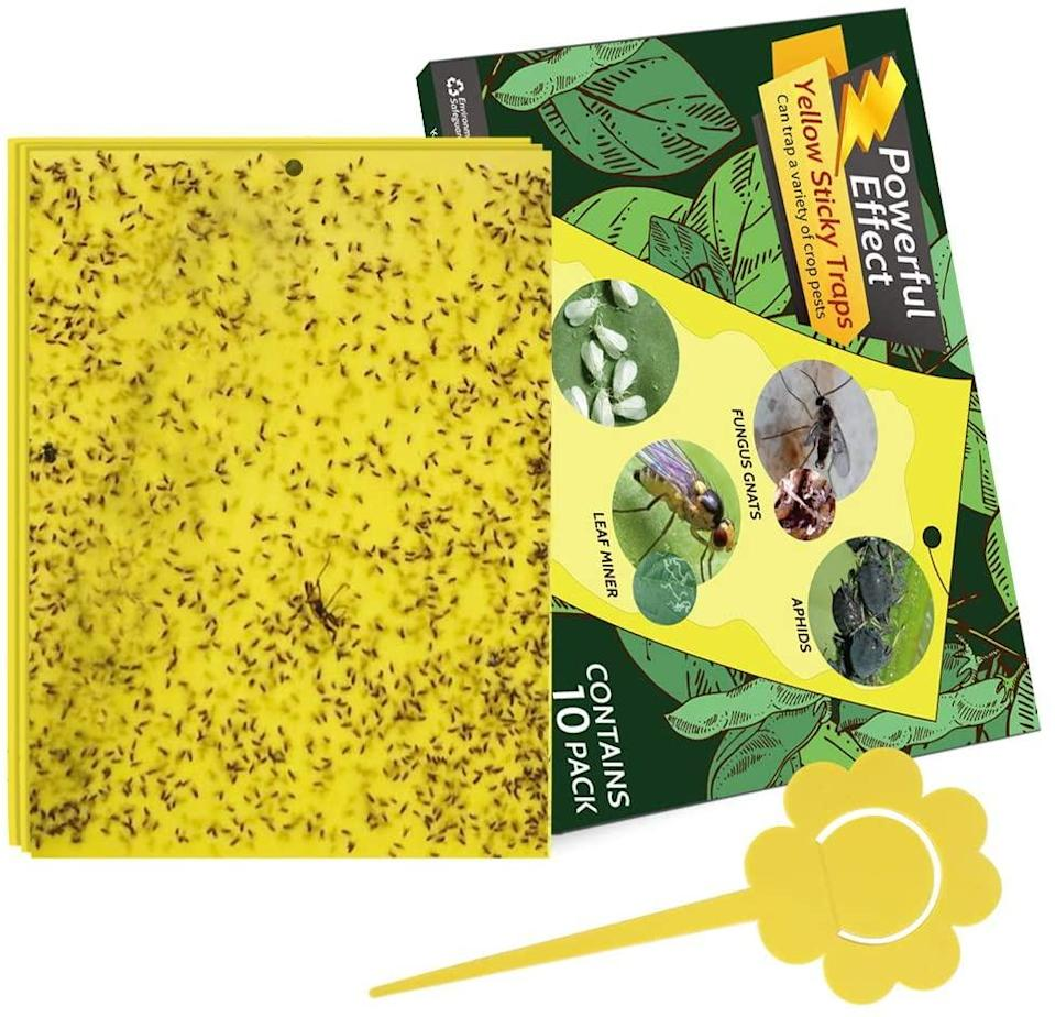 mosquito traps kensizer dual sided sticky gnat traps