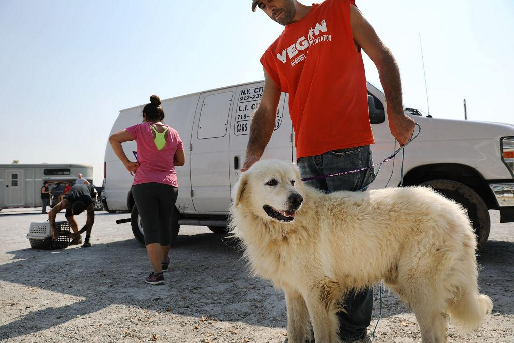 <p>Volunteers with an animal rescue organization bring in a dog that was found abandoned in a flooded home in Orange, Texas. If the animals are not picked up by their owners they will be delivered to local no-kill shelters in the state. Thousands of pets and livestock have either run away or been left to fend for themselves after Hurricane Harvey ravaged parts of the state of Texas. (Spencer Platt/Getty Images) </p>