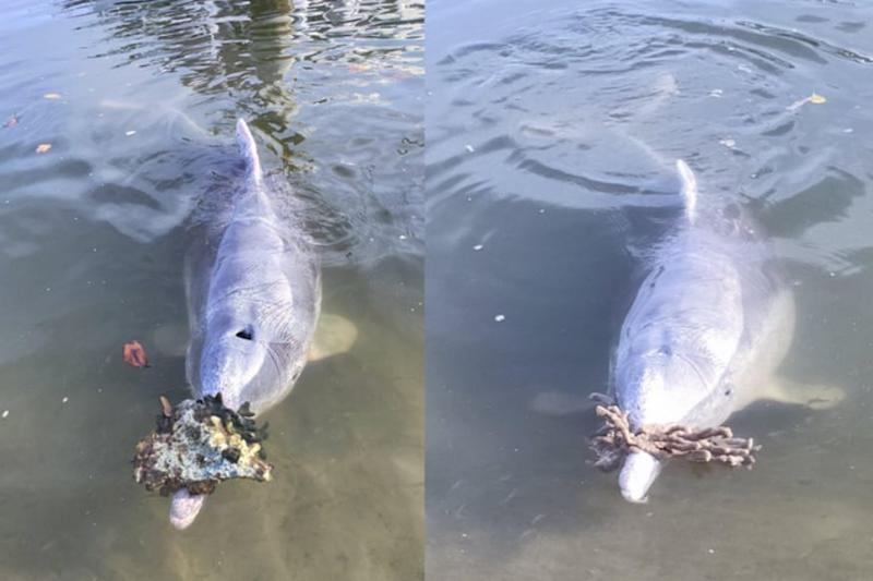 This Dolphin is Getting Gifts for Visitors From Depths of the Ocean Because it Misses Human Interaction
