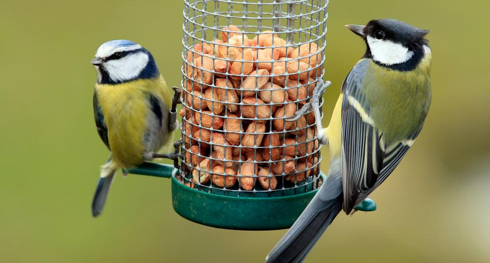 Everything you need to know if you're a budding birdwatcher. (Getty Images)