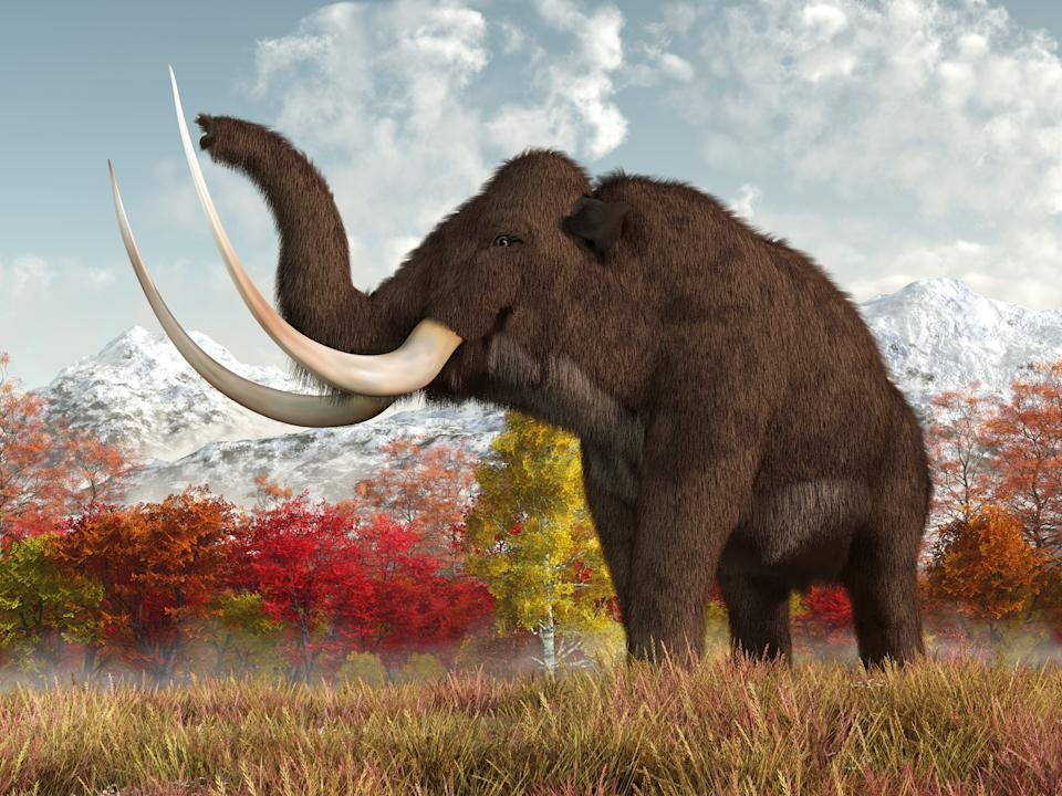 A shaggy woolly mammoth stands in the long grass of a field in an autumn scene.  This massive animal is an extinct creature of the ice age. 3D Rendering