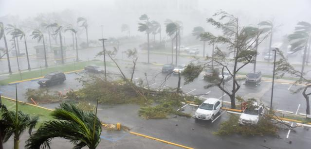 Trees are toppled in a parking lot at Roberto Clemente Coliseum in San Juan, Puerto Rico, on September 20, 2017, during the passage of the Hurricane Maria. (HECTOR RETAMAL via Getty Images)