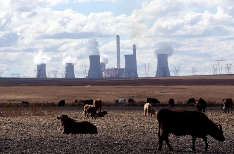 FILE PHOTO: Cows graze as steam rises from the cooling towers of Matla Power Station, a coal-fired power plant operated by Eskom in Mpumalanga province, South Africa