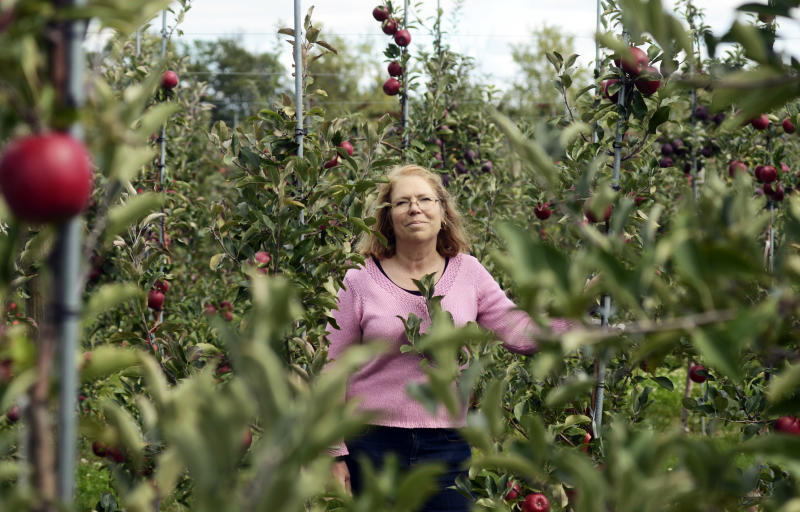 Cornell research orchard seeks the perfect apple