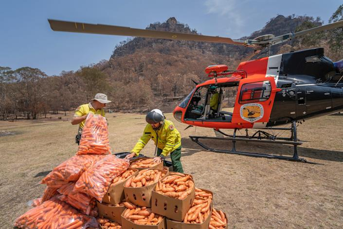 The New South Wales National Parks and Wildlife Service dropped thousands of pounds of carrots and sweet potatoes from helicopters to assist the brush-tailed rock-wallaby population.