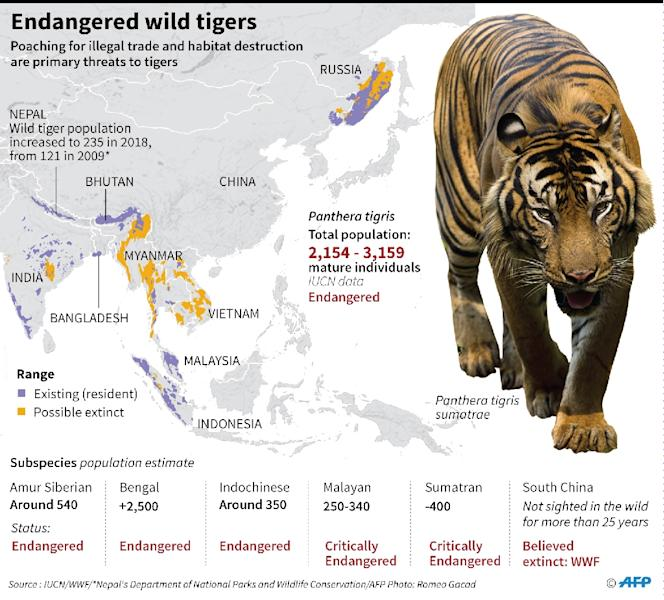 Factfile on wild tiger population and range (AFP Photo/Gal ROMA)