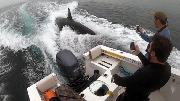 PHOTO: Video captured a close encounter with a fishing boat and an Orca whale off the coast of San Diego, Calif. (Kevin Guck)
