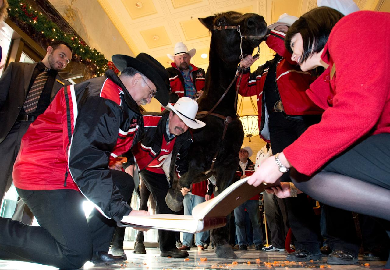 Marty the Horse signs the Royal York Hotel Guestbook as he is ridden by Fletcher Armstrong, with the Calgary Grey Cup committee, in the front foyer of the Royal York hotel Thursday, Nov. 22, 2012 in Toronto. Calgary Stampeders will play the Toronto Argonauts in the Canadian Football League Grey Cup Sunday, Nov. 25, 2012. THE CANADIAN PRESS/Sean Kilpatrick