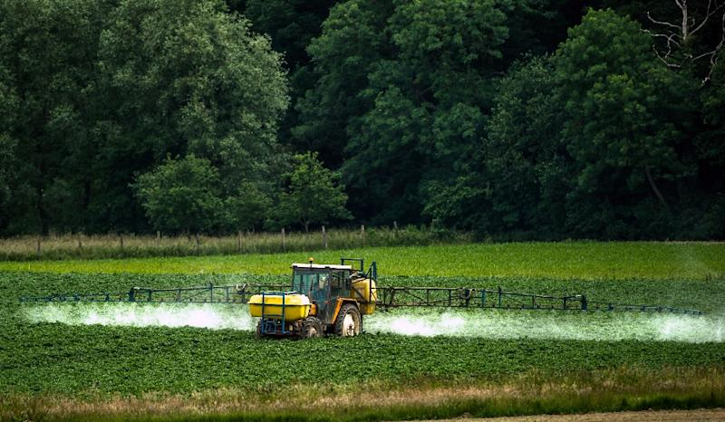 A raging dispute on both sides of the Atlantic have centred on whether the weedkiller glyphosate causes cancer and should be banned