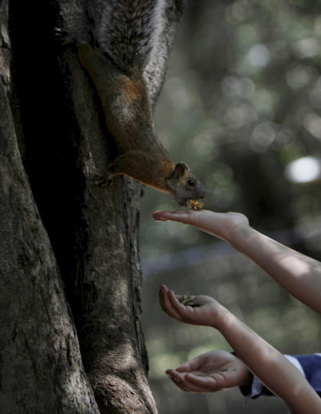 People feed a squirrel at the Chapultepec Park in Mexico City, Sunday, Nov. 18, 2012. Chapultepec is a park divided between shady stretches of forest and more-developed plazas, fountains and sculpture gardens. On weekends, the northern end is crammed with vendors, entertainers and families out for the day. (AP Photo/Marco Ugarte)