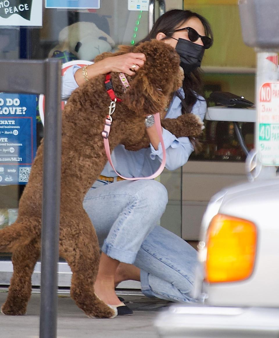 <p>Jordana Brewster gets an effusive snuggle from her pup while out in Brentwood, California, on Wednesday.</p>