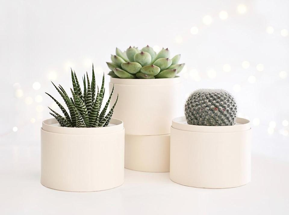 "<strong><h3>Lula's Garden</h3></strong><br>Turn to Lula's for simple, stylish, and eco-friendly succulent garden box online shopping. The plants range in price from $25 to $85, come complete with individual care kits, and nationwide shipping with same-day delivery in L.A. to boot.<br><br><em>Visit <a href=""https://www.lulasgarden.com/"" rel=""nofollow noopener"" target=""_blank"" data-ylk=""slk:Lula's Garden"" class=""link rapid-noclick-resp"">Lula's Garden</a>.</em>"