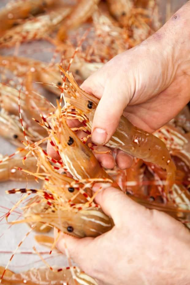 The Department of Fisheries and Oceans has temporarily backtracked on a regulation change that local spot prawn harvesters and sellers had warned would destroy domestic markets. (Chefs' Table Society of British Columbia - image credit)