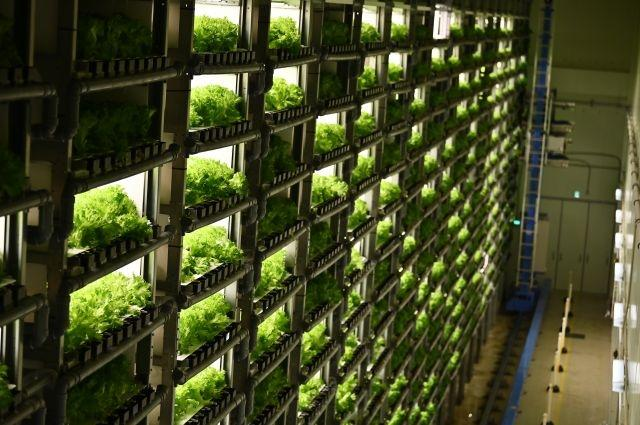 Grown from necessity: vertical farming takes off in ageing Japan