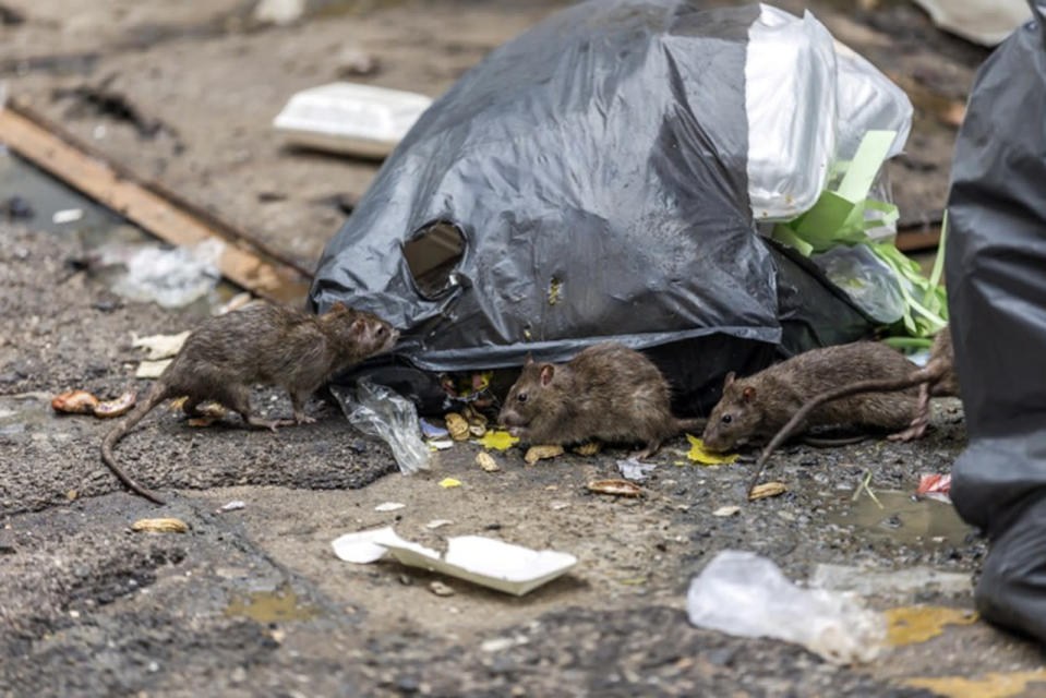 Sidewalk collapses, sends man into rat-filled hole