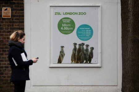 A pedestrian walks past a poster featuring meerkats at London Zoo. Photo: Reuters