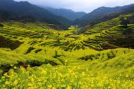 <p>These sprawling fields of yellow flowers will brighten any trip you take. </p>
