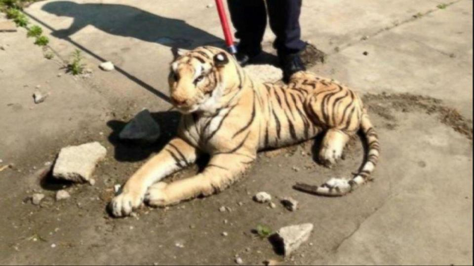 Mich. Animal Control Officer Responds to Report of Tiger in Backyard, Finds Stuffed Animal (ABC News)