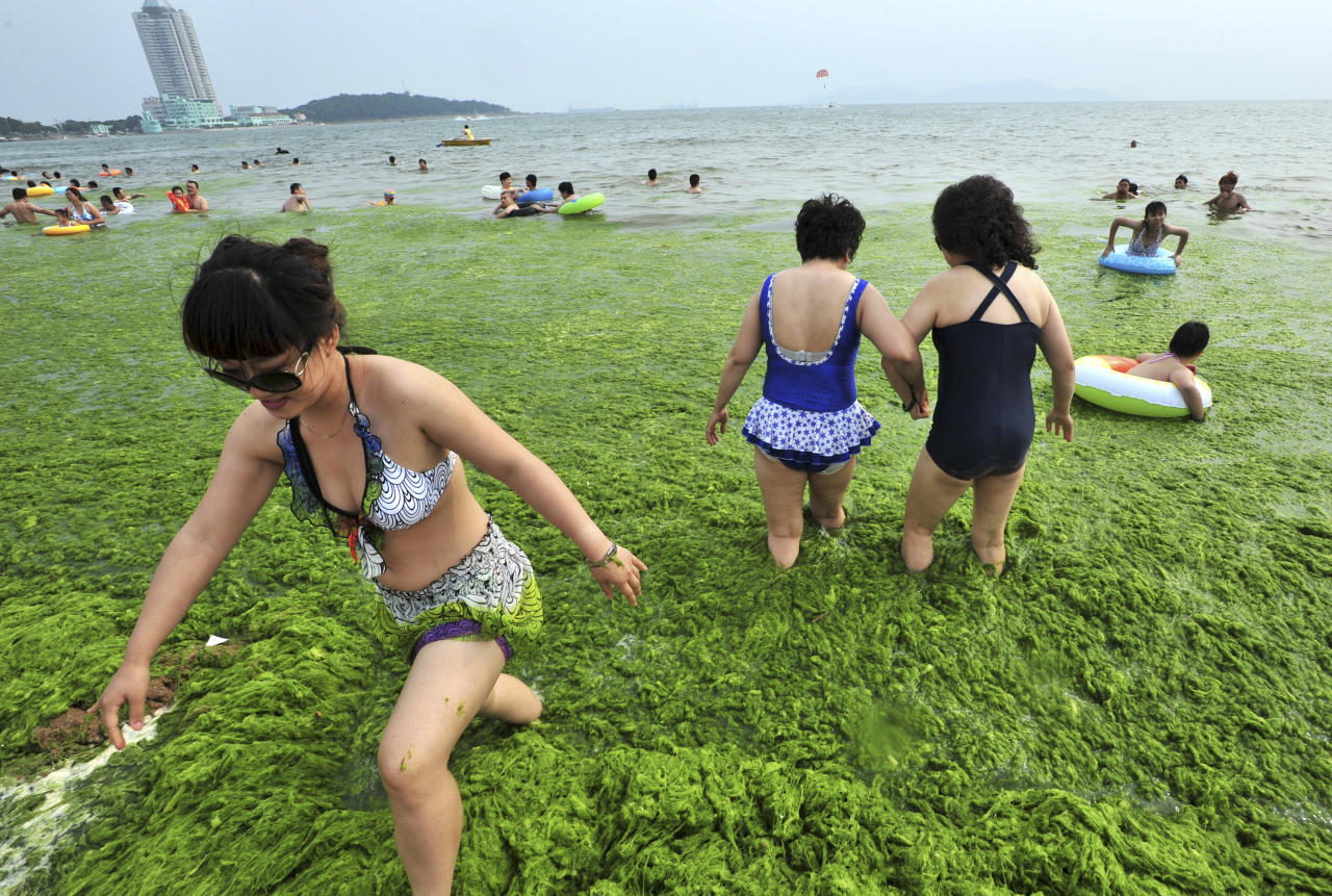 Residents walk amidst the algae-filled coastline of Qingdao, Shandong province July 15, 2011. Picture taken July 15, 2011. REUTERS/China Daily