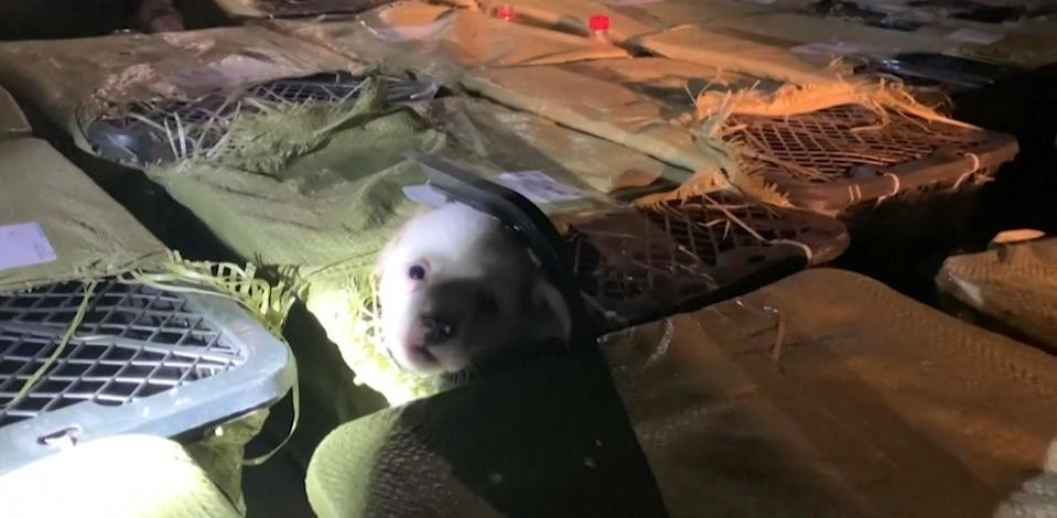 <p>Towers of 156 boxes with kittens and puppies were recovered in a truck in Chengdu region, Southwest China's Sichuan Province</p> (Screengrab/AP)