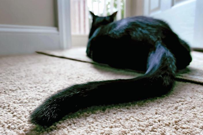 How Many Surfaces Does Your Cat's Butt Touch?