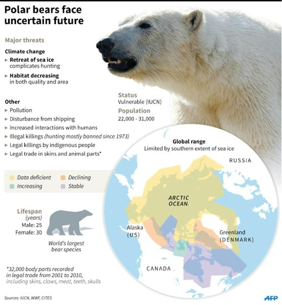 Factfile on polar bears, whose survival is threatened by global warming and related threats