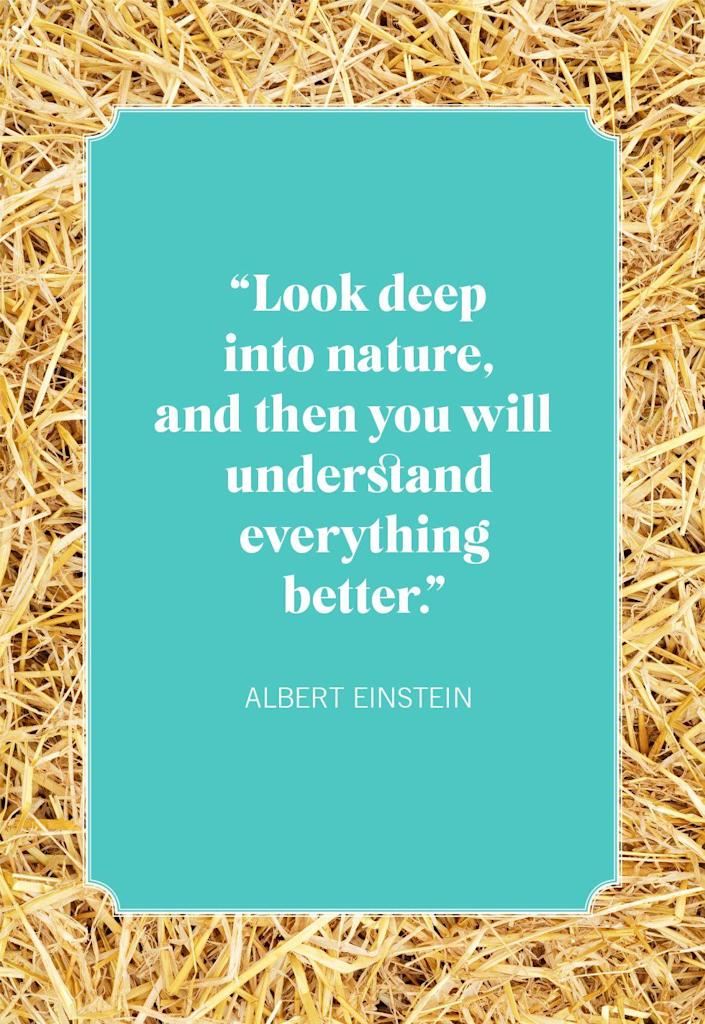 """<p>""""Look deep into nature, and then you will understand everything better.""""</p>"""