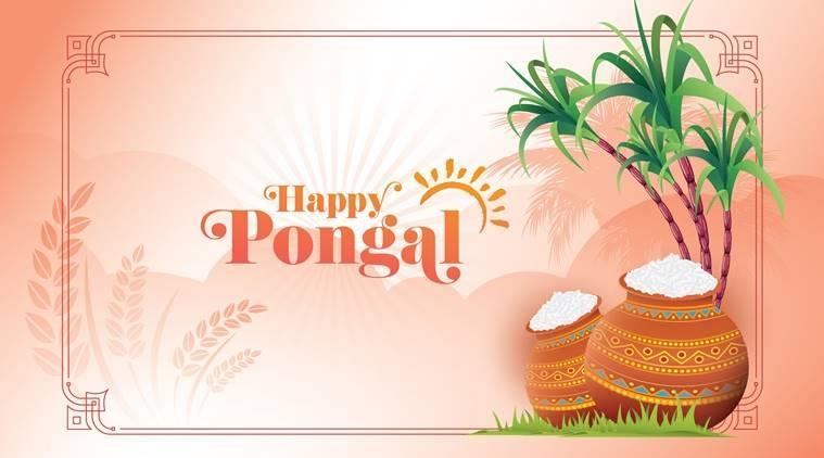pongal 2019, pongal 2019 date, pongal 2019 date in tamilnadu, pongal 2019 in karnataka, pongal 2019 tamil calendar, pongal 2019 date in india, tamil pongal 2019, tamil pongal 2019 date, tamil pongal 2019 date in india, tamil pongal 2019 tamil calendar, indian express, indian express