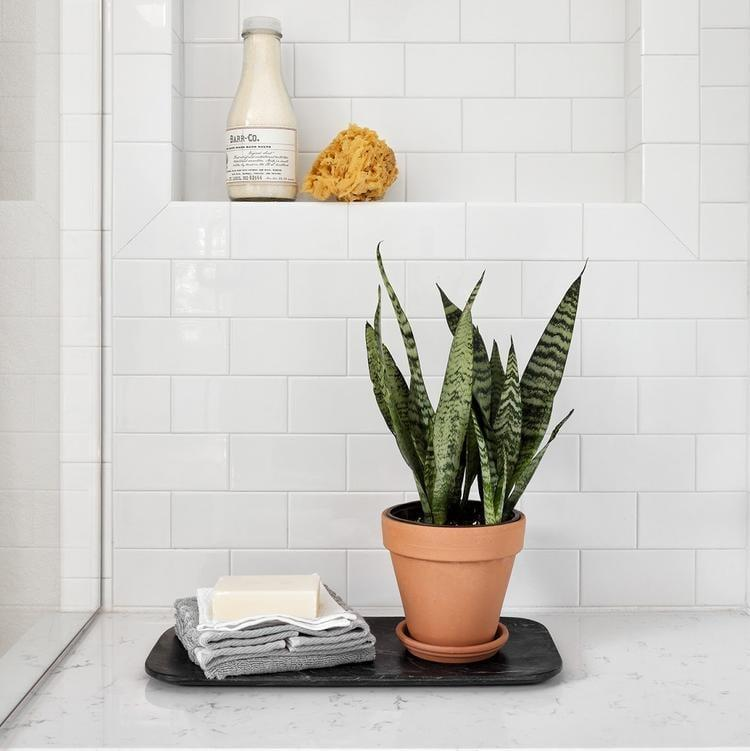 """<p>It doesn't get much easier than a <a href=""""https://www.popsugar.com/buy/Live-Snake-Plant-568823?p_name=Live%20Snake%20Plant&retailer=shop.magnolia.com&pid=568823&price=30&evar1=casa%3Aus&evar9=46127505&evar98=https%3A%2F%2Fwww.popsugar.com%2Fhome%2Fphoto-gallery%2F46127505%2Fimage%2F47428958%2FLive-Snake-Plant&list1=shopping%2Cgift%20guide%2Cflowers%2Chouse%20plants%2Cplants%2Cmothers%20day%2Cgifts%20for%20women&prop13=api&pdata=1"""" class=""""link rapid-noclick-resp"""" rel=""""nofollow noopener"""" target=""""_blank"""" data-ylk=""""slk:Live Snake Plant"""">Live Snake Plant</a> ($30). This no-fuss plant enjoys indirect sunlight but can adapt in almost all light conditions, making it a perfect gift for <a class=""""link rapid-noclick-resp"""" href=""""https://www.popsugar.com/Mother%E2%80%99s-Day"""" rel=""""nofollow noopener"""" target=""""_blank"""" data-ylk=""""slk:Mother's Day"""">Mother's Day</a>.</p>"""