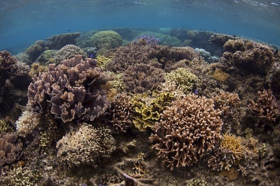 Sickly Coral Reefs Fail the Smell Test