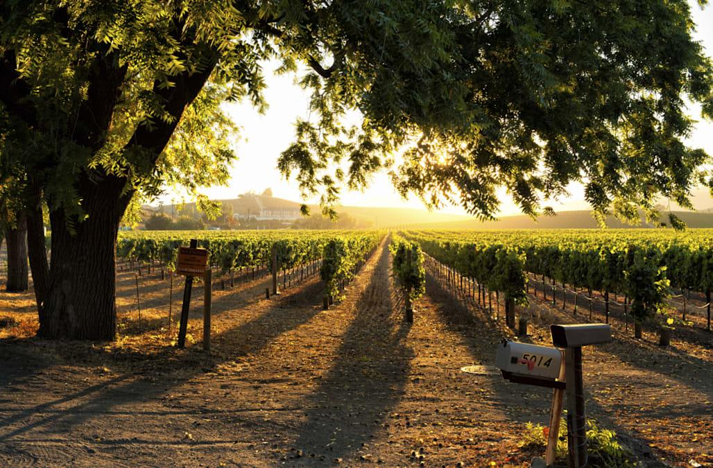 Sunset in Sonoma wine country