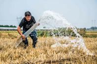 Climate change is likely to reduce the nutritional value of key crops upon which billions rely