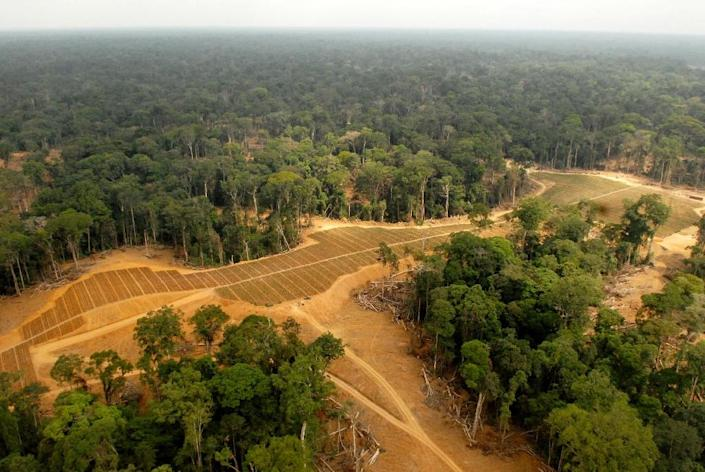 Its lower cost has made it popular in commercial food production, but after being blamed for deforestation in Asia, palm oil plantations are now getting a similar rap in Africa (AFP Photo/Xavier Bourgois)