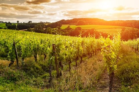 A vineyard in Gascony - Credit: GETTY