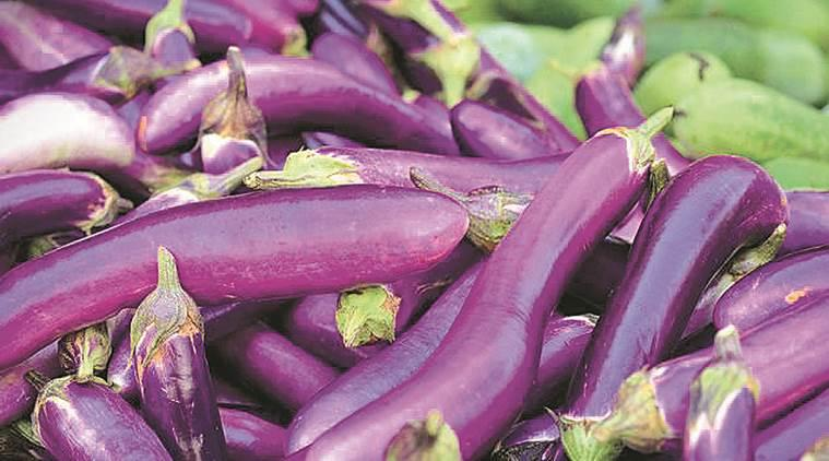 To end UPA freeze on Bt brinjal, regulator looks at Bangladesh