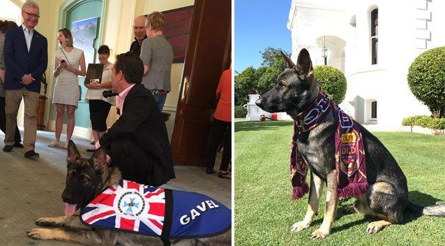 The pup is now a greeter at Government House. Source: Facebook