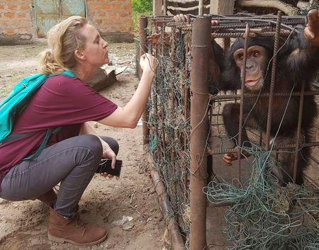 WARA Conservation Project Coordinator Charlotte Houpline looks at chimpanzees in a cage in a private zoo in Kindia, Guinea