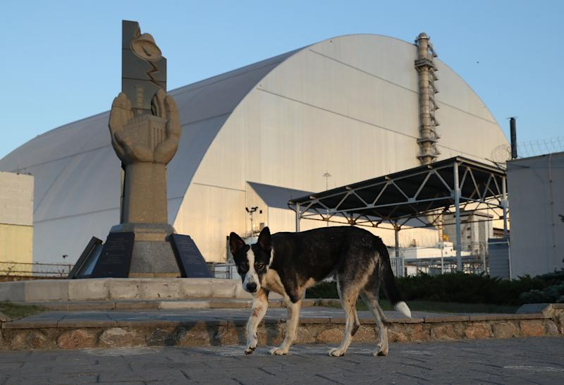 A stray dog stands at a monument outside the new, giant enclosure that covers devastated reactor number four at the Chernobyl nuclear power plant on August 18, 2017.