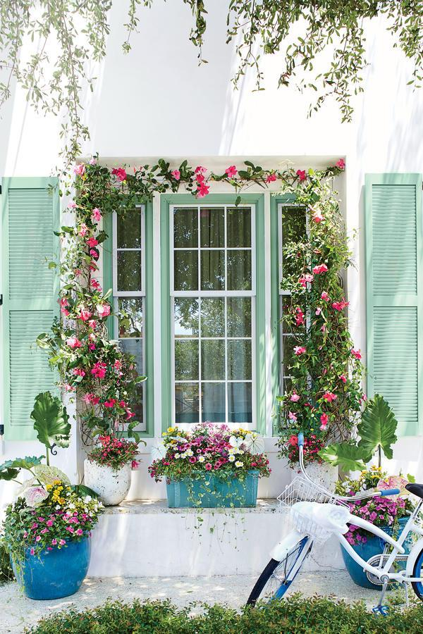 <p>A mix of mostly pink and magenta blooms with pops of white and yellow are placed in three turquoise containers for a vibrant, beach-inspired walkway display. The mandevilla plant featured here is a common patio plant that can withstand the typicalhot, muggy weather inthe South.</p>